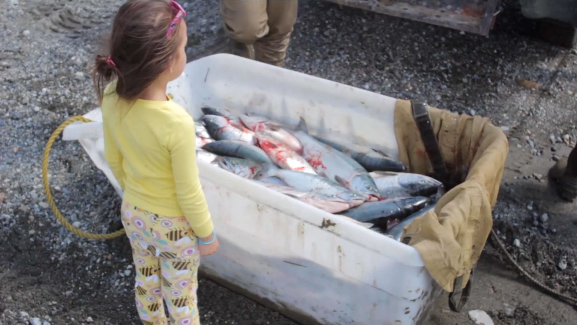 Learn about wild Salmon!